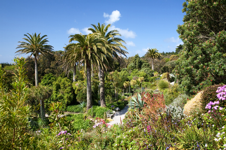 scilly: Abbey Gardens, Tresco, Isles of Scilly, Cornwall, England