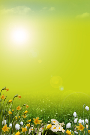 spring season: Spring background with meadow and wild flowers Stock Photo