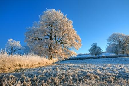 hoar frost: Hoar frost, Cotswold countryside, England Stock Photo