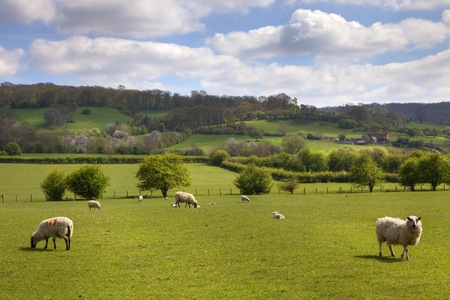 lambing: Farmland at lambing time near Weston Subedge, Chipping Campden, Gloucestershire, England  Stock Photo