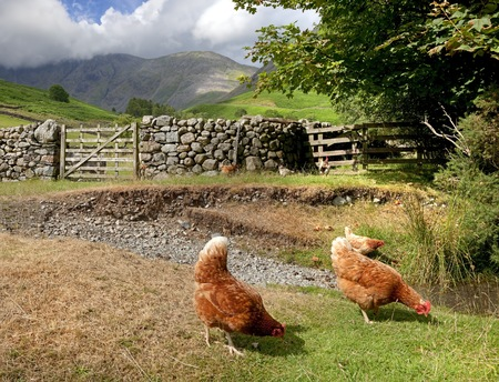 Wasdale Head near Wast Water, the Lake District, Cumbria, England Stock Photo - 24516948