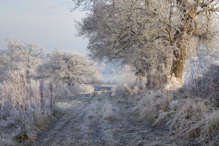 hedgerow: Rural countryside with hoar frost near Chipping Campden, Gloucestershire, England