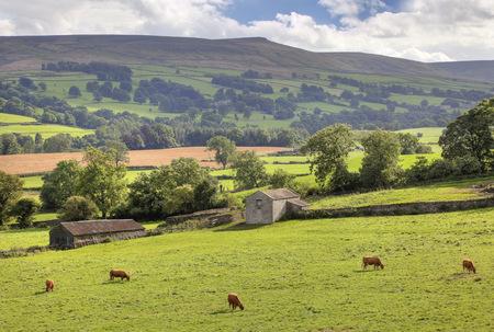 Rural Middleham, Yorkshire Dales National Park, England  photo
