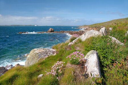 scilly: Thrift and other wild flowers growing on St Mary's, Isles of Scilly, Cornwall, England. Stock Photo