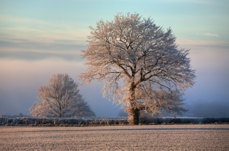 Hoar frost on farmland near Chipping Campden, Gloucestershire, England.