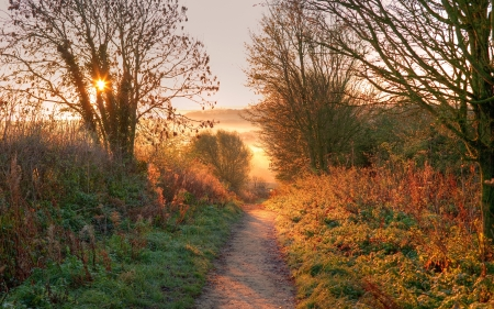 hedgerow: The sun rising on the Cotswold Way near Chipping Campden, Gloucestershire, England.