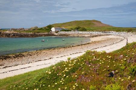 scilly: Cape Fig growing on the pretty coastline of Bryher, Isles of Scilly, Cornwall, England. Stock Photo