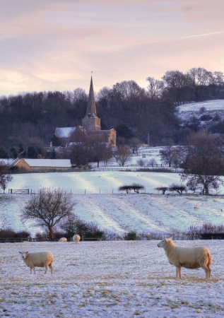 Pretty winters scene at Saintbury with church and sheep, Chipping Campden, Gloucestershire, England.