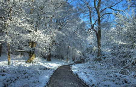 deciduous woodland: Path leading through a snow covered deciduous woodland, Worcestershire, England.