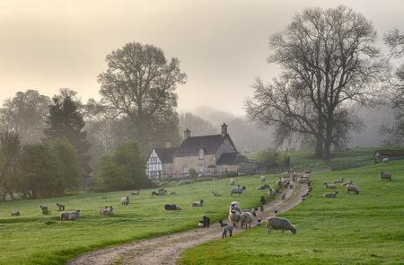 霧コッツウォルズ春の朝、チッピング ・ カムデン、英国グロスターシャーの近く Saintbury 写真素材