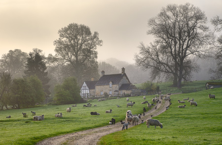 ovejas bebes: Una mañana de primavera Cotswold brumoso, Saintbury cerca de Chipping Campden, Gloucestershire, Inglaterra Foto de archivo