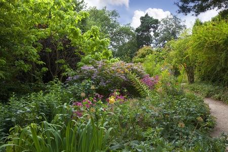 Woodland shrubbery garden, England