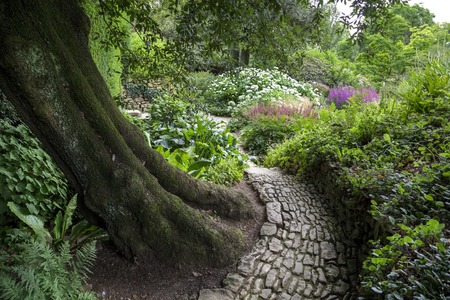 path cottage garden: Stone path winding around Holm Oak, England Stock Photo