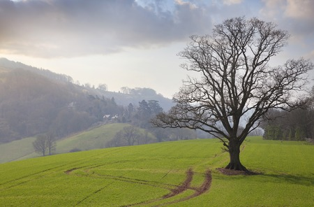 english oak: View from Goodrich Castle over Herefordshire countryside, England.