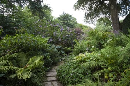 english oak: Stone path winding through woodland garden, England Stock Photo