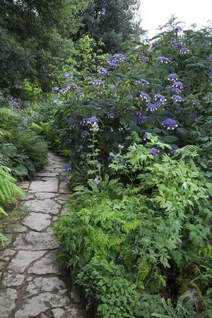 british isles: Stone path leading through woodland garden