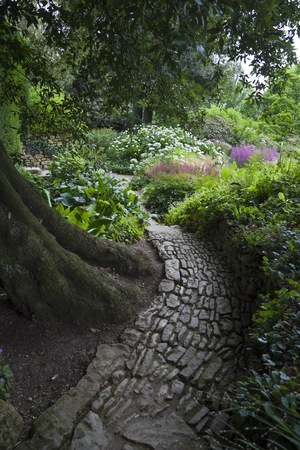 stone path: Stone path winding around Holm Oak, England Stock Photo