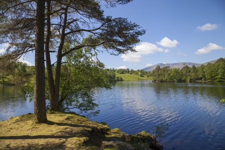 scots: Tarn Hows, Lake District, Cumbria, England Stock Photo