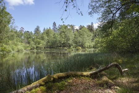 lake district: Mossy woodland at Tarn Hows, Lake District, Cumbria, England Stock Photo