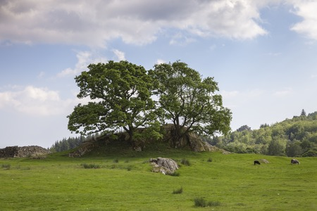 lake district: Outcrop with oak trees, The Lake District, Cumbria, England