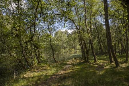 cumbria: Spring wood at Tarn Hows, Cumbria, England