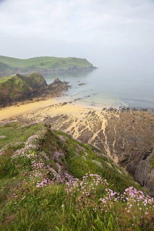 Devonshire coastline with wild flowers, England. Foto de archivo