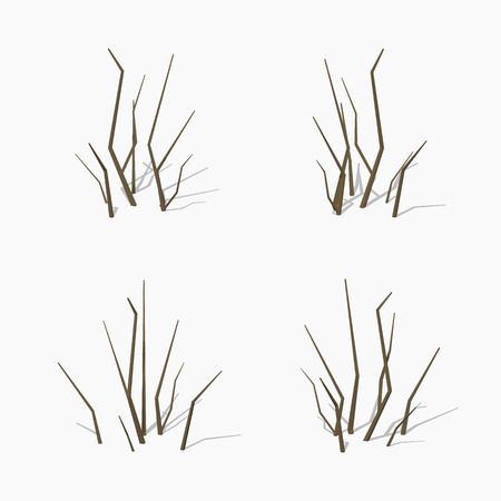 dried: Dried branches. 3D lowpoly isometric vector illustration. The set of objects isolated against the white background and shown from different sides