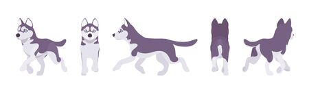 Husky dog running. Northern sled, medium size compact Siberian breed, cute family companion for active fun and home security. Illustration
