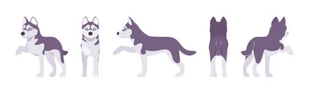 Husky dog giving paw. Northern sled, medium size compact Siberian breed, cute family companion, active fun and home security. Illustration