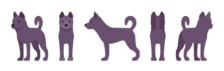 Black dog standing. Medium size compact pet, family companion for active fun, home guarding, farm security, cute agile breed.