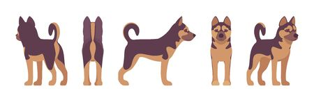Shepherd dog standing. Working breed, family pet, companion for disability assistance, search, rescue, police, military help. Vector flat style cartoon illustration, white background, different views Ilustrace
