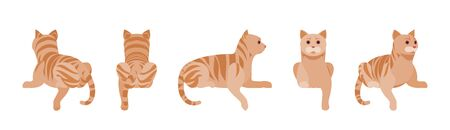 Ginger Tabby Cat lying. Active healthy kitten with orange, red, and yellow-colored fur, cute funny pet having rest. Vector flat style cartoon illustration isolated on white background, different views