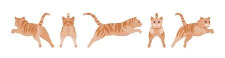 Ginger Tabby Cat jumping. Active healthy kitten with orange, red, and yellow-colored fur, cute funny pet in attack. Vector flat style cartoon illustration isolated on white background, different views