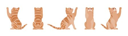 Ginger Tabby Cat playing. Active healthy kitten with orange, red, and yellow-colored fur, cute funny pet. Vector flat style cartoon illustration isolated on white background, different views