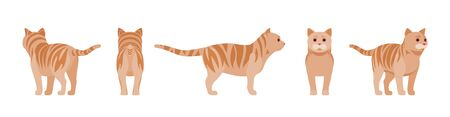 Ginger Tabby Cat standing. Active healthy kitten with orange, red, and yellow-colored fur, cute funny pet. Vector flat style cartoon illustration isolated on white background, different views