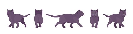 Black Cat walking. Active healthy kitten with dark, gray colored fur, cute funny pet, mystic bad luck omen. Vector flat style cartoon illustration isolated on white background, different views