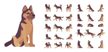 Shepherd dog set. Working breed, family pet, assistance, search service, rescue, police, and military help. Vector flat style cartoon illustration isolated, white background, different views, poses Illustration