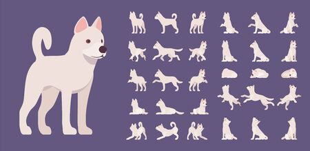 White dog set. Working active breed, cute family home pet, companion for disability assistance, search, rescue, police, military help. Vector flat style cartoon illustration, different views and poses Archivio Fotografico - 132036162