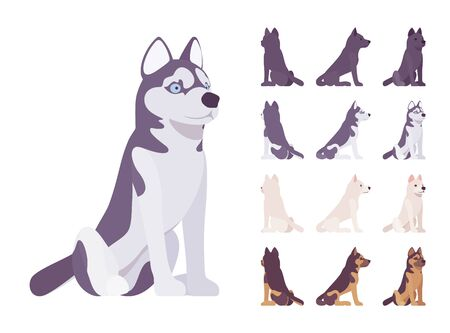 Black, White dog, Husky, Shepherd sitting set. Pet, family companion, home guarding, farm or police security breed. Vector flat style cartoon illustration isolated, white background, different views