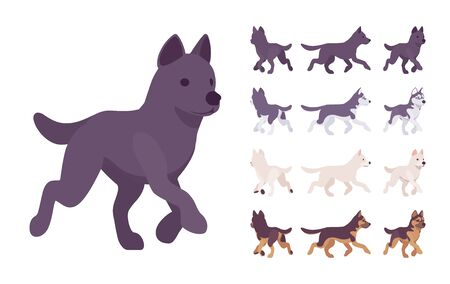 Black, White dog, Husky, Shepherd running set. Pet, family companion, home guarding, farm or police security breed. Vector flat style cartoon illustration isolated, white background, different views Stock Vector - 132043928