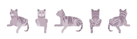 Grey striped Cat lying. Active healthy kitten with mackerel tabby colored fur, cute funny pet, playful companion. Vector flat style cartoon illustration isolated on white background, different views Illustration
