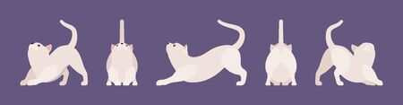 White pedigree cat stretching. Active healthy kitten with beautiful fur and light coat, cute funny pet, home playful loving companion. Vector flat style cartoon illustration different views