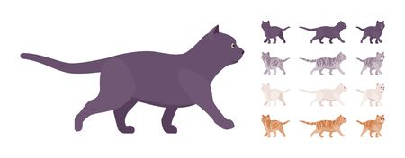 White, black, orange, grey striped pedigree cat walking set. Active healthy kitten with beautiful fur, cute funny pet, home playful companion. Vector flat style cartoon illustration different views Illustration
