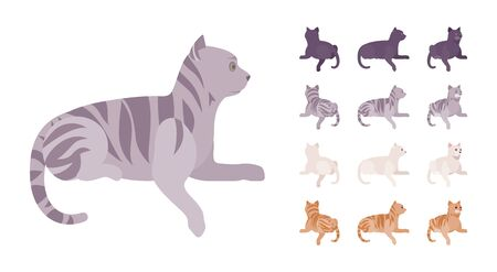 White, black, orange, grey striped pedigree cat lying set. Active healthy kitten with beautiful fur, cute funny pet, home playful companion. Vector flat style cartoon illustration different views