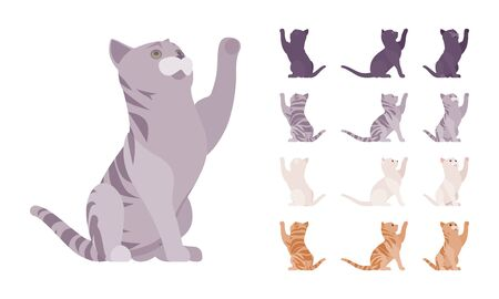 White, black, orange, grey striped pedigree cat playing set. Active healthy kitten with beautiful fur, cute funny pet, home playful companion. Vector flat style cartoon illustration different views