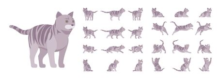 Grey striped Cat set. Active healthy kitten with mackerel tabby colored fur, funny pet, playful companion. Vector flat style cartoon illustration isolated, white background, different views and poses Stock fotó - 135503702