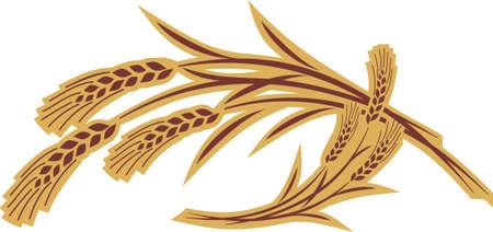 centeno: grano orejas