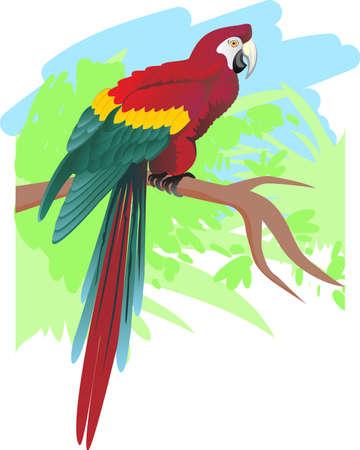 Parrot Stock Vector - 4884127