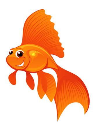 pez dorado: Carassius auratus sonriente aislados en blanco