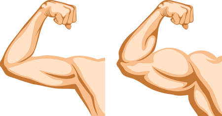 muscle arm: Before and After. Two hands shows progress after fitness.